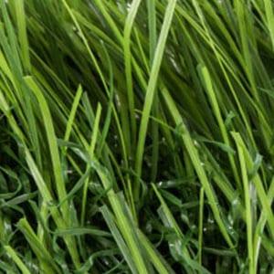 Grass-Banner
